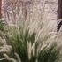 20110330084136-texasgrass20x16