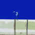 20110331052207-small_heron_on_fence_16x20