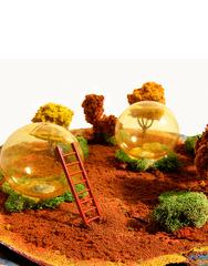 Utopian Grove, KIM HOLLEMAN