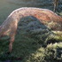 20110402065834-anthill_ii__arched_form____86_x_200_x_70cms___chicken_wire_and_copper_wire