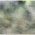 20110405024938-koendelaere__zonder_titel__olieverf_en_spraypaint_op_doek__150_x_250_cm__2009
