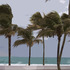 20110407064436-windblownpalms20x16