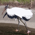 20110407065327-stork_in_browns20x16