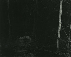 Alex_slade__forest_s_edge__naples__me__2007__toned_silver_gelatin_print__54_x_69_inches