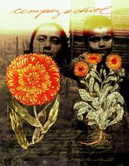 Badius Botanicals II, Amalia Mesa-Bains