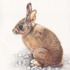 20110420153854-bunnie_copy