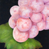 20110422163547-grapes_raw