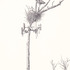 20110422182607-untitled__nest_