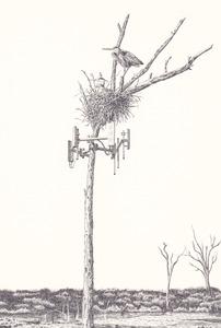20110422182607-untitled__nest_