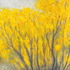 20110424001808-yellow_flower