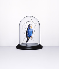 Budgie, Nancy Fouts