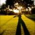 20110425112734-louis_stanley_lawn_shadows