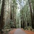 20110425120040-louis_stanley_forest_road