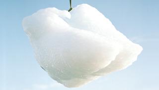 My Polar Ice (still), Teun Castelein & Coralie Vogelaar