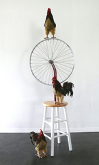 Bicycle Roosters,Luciano Perna
