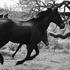 20110427225508-kpb-horses02b