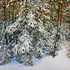 20110501171502-overnight_snowfall_15_40_x_41