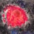 20110502174752-pez_rojo