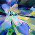 20110508224456-heaven-scent