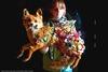 20110511005712-fox