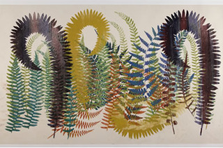 Asidium, Aspenium, Pteris,Philip Taaffe