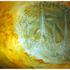20110511235341-amber_nesting__detail_