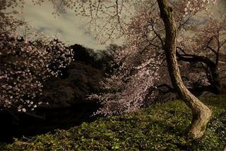 Tokyo Imperial Memories, After Dark  , Ori Gersht