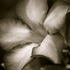 20110512183638-flower
