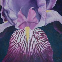 Iris, Ann Berg