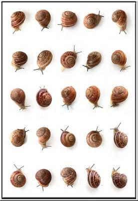 20110525140912-snailwebweb
