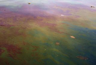 Untitled (Methane), (detail), Kim Hoeckele
