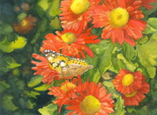 Painted Lady- 1st Place - ,Georgette Grey