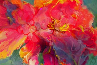 Peony Poetry - 1st Place Colors, Mary Sonya Conti