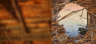WIND REFLECTION image, Abraham Storer, Lili Chin
