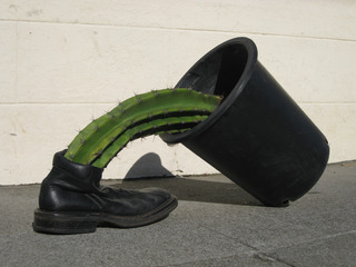 Shoe, Cactus and Pot,Chris Sollars