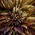 20110624101253-flowering2