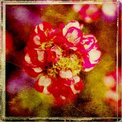 20110629122020-vintage_garden_103