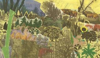 Yellow Leaves 802 (Burlington, Vermont), Anne Percoco