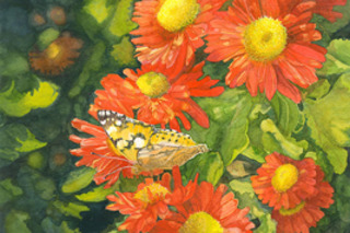 Painted Lady,