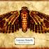 20110709184308-lintonian_butterfly