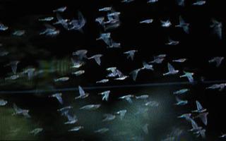 #19 Migration Series , Cecilia Schmidt