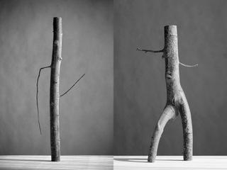 Arbor 2, Luis Delgado