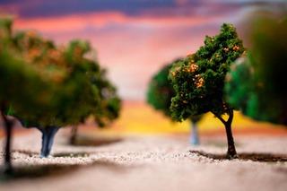The Grove, Sandra Elkind