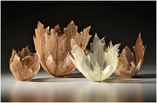 """GROUP OF BIG LEAF MAPLE LEAF BOWLS"" ,Kay Sekimachi"
