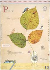 """Poison Ivy"" , MF Cardamone"