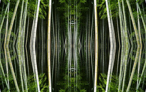 20111201073145-bamboo_forest_net