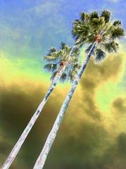 Palm Pilot, Maureen J Haldeman