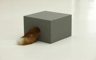 Fox in Box, Adam Parker Smith
