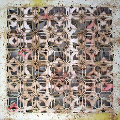 20110826215024-honeysuckle