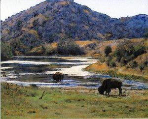 20110828155321-catalina_buffallo